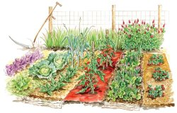 Growth for Grown - Create a Vegetable Garden